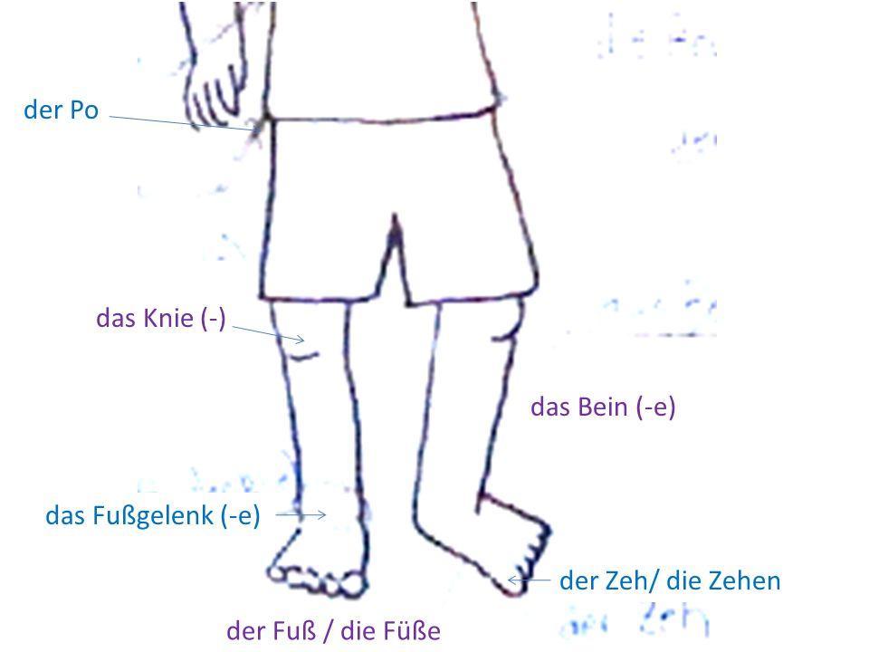 der Po das Knie (-) das Bein (-e) das Fußgelenk (-e) der Zeh/ die Zehen der Fuß / die Füße