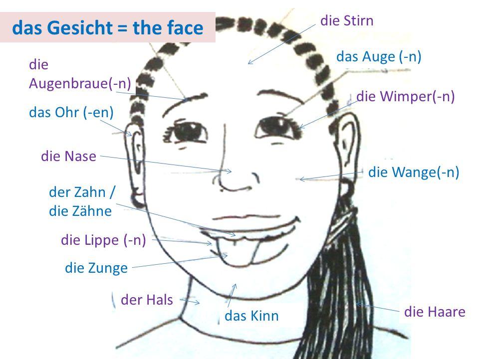 das Gesicht = the face die Stirn das Auge (-n) die Augenbraue(-n)