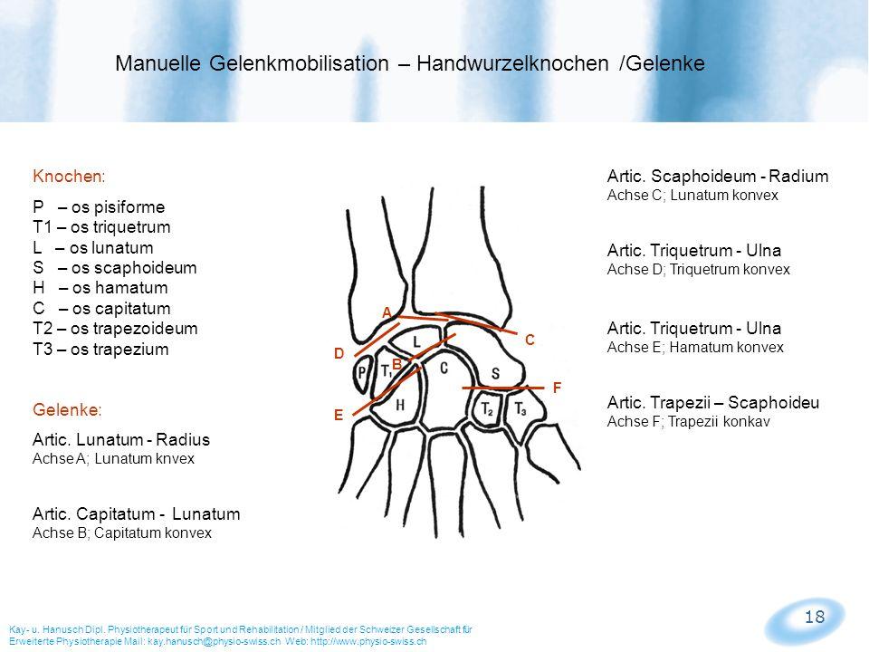 Manuelle Gelenkmobilisation – Handwurzelknochen /Gelenke