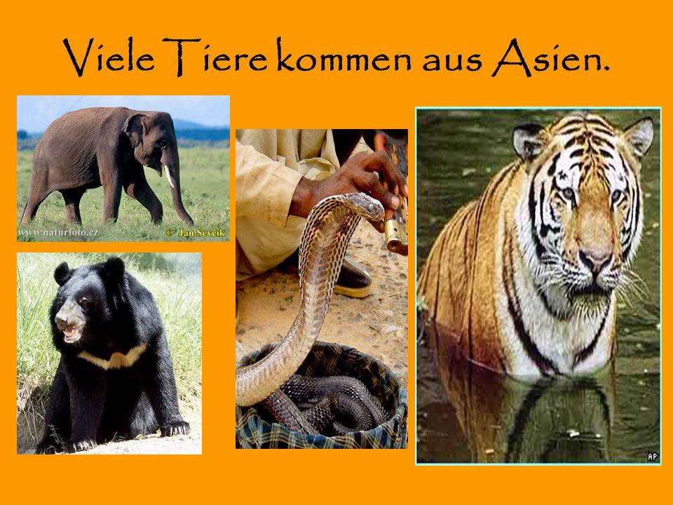 Viele Tiere kommen aus Asien.