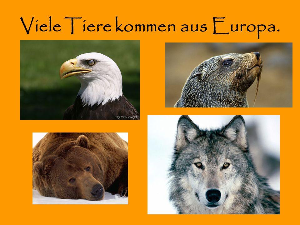 Viele Tiere kommen aus Europa.