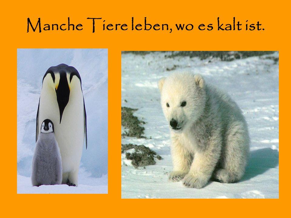 Manche Tiere leben, wo es kalt ist.