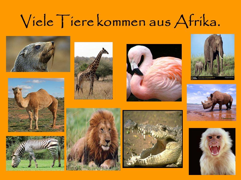 Viele Tiere kommen aus Afrika.