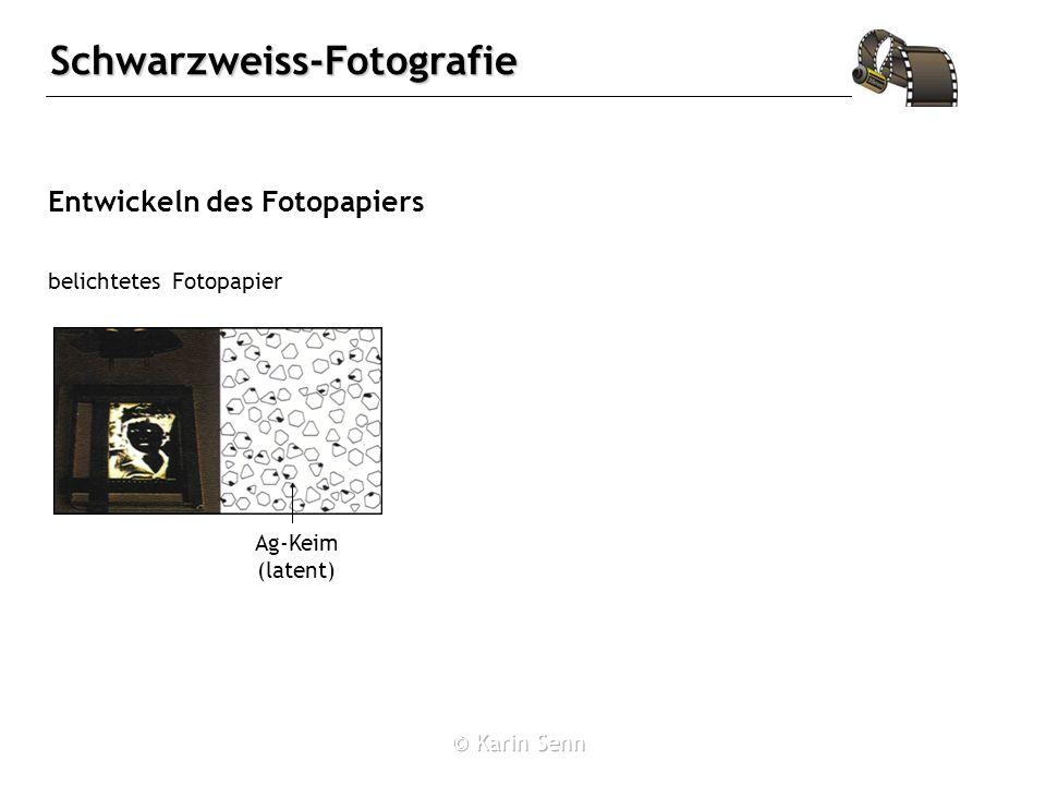 Entwickeln des Fotopapiers