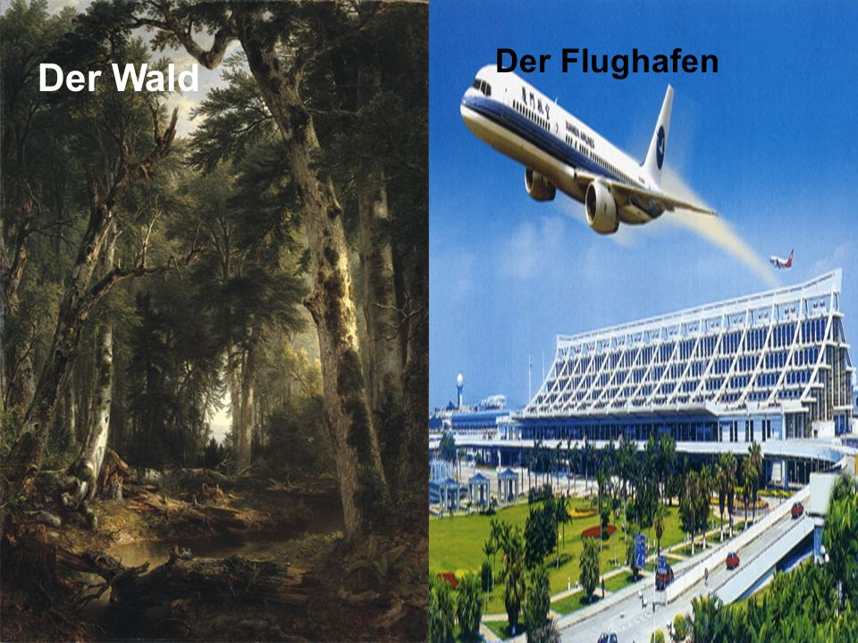 Der Flughafen Der Wald