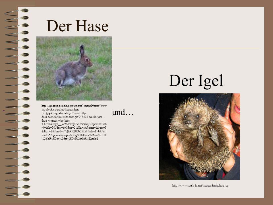 Der HaseDer Igel.