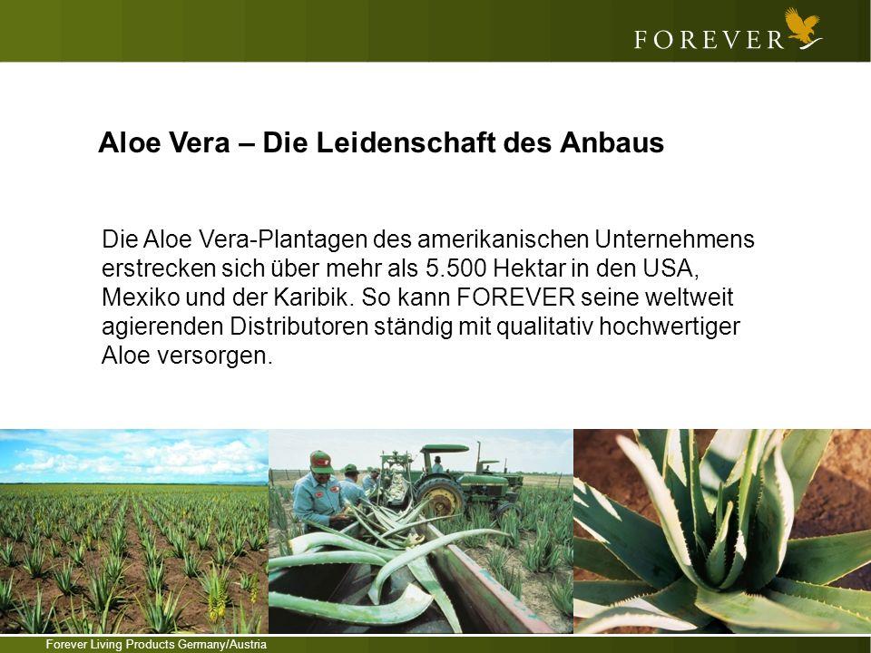 Aloe Vera – Die Leidenschaft des Anbaus