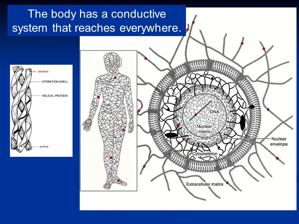 The body has a conductive system that reaches everywhere.