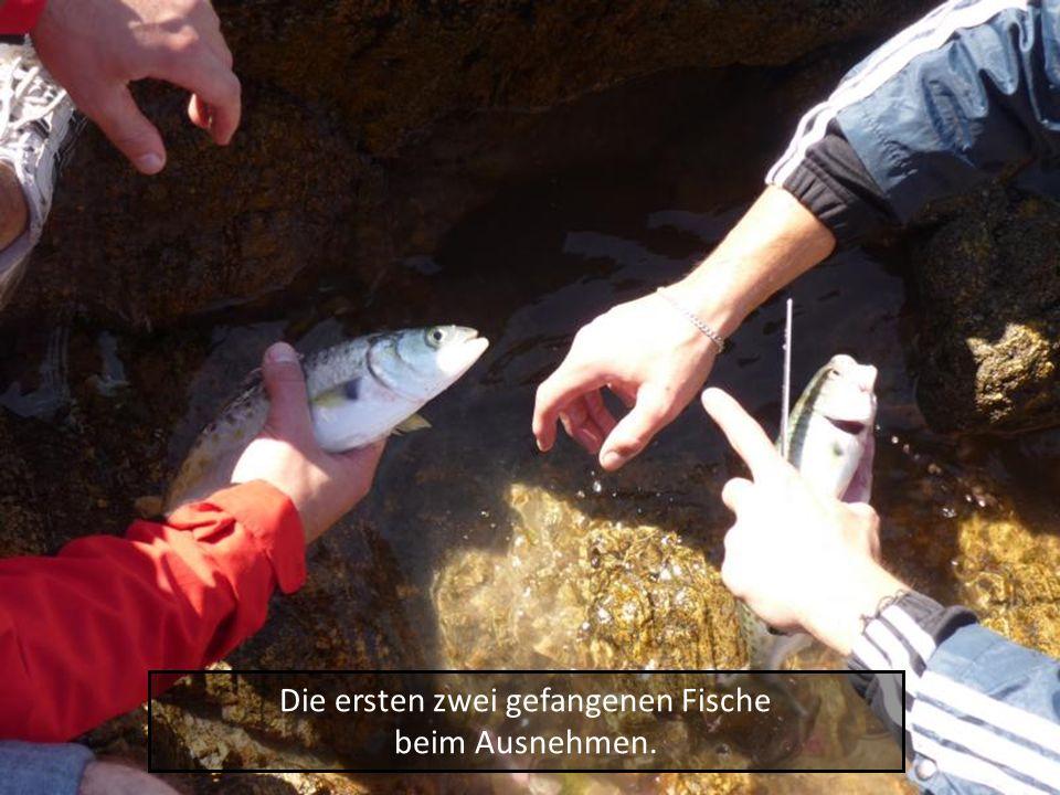Die ersten zwei gefangenen Fische beim Ausnehmen.