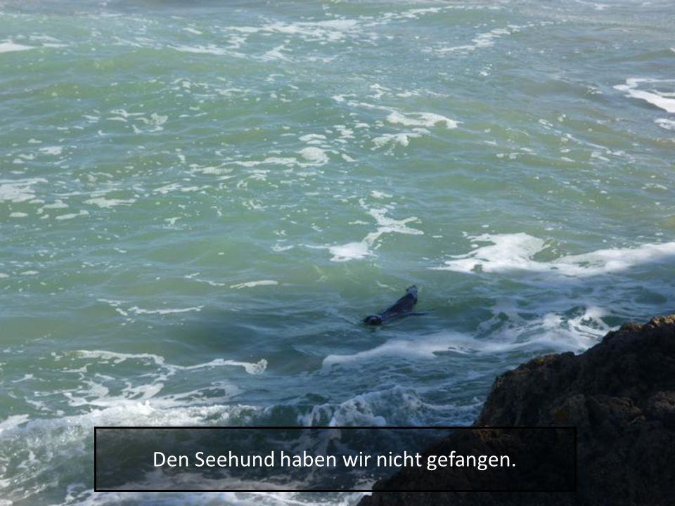 Den Seehund haben wir nicht gefangen.