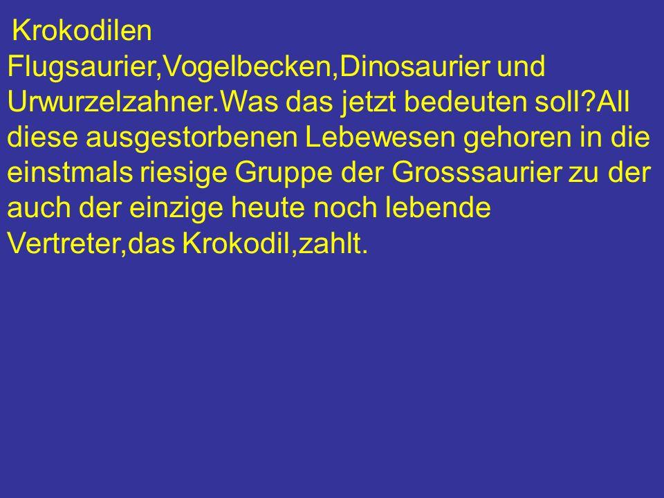 Krokodilen