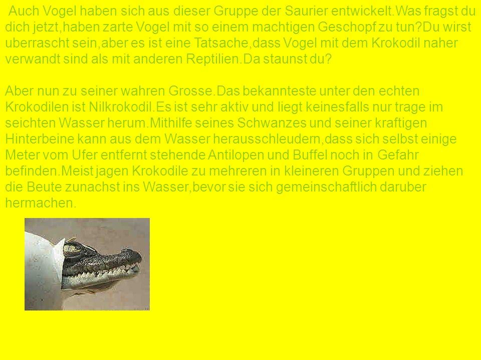 Auch Vogel haben sich aus dieser Gruppe der Saurier entwickelt