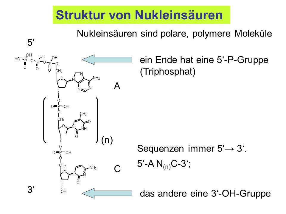 Struktur von Nukleinsäuren