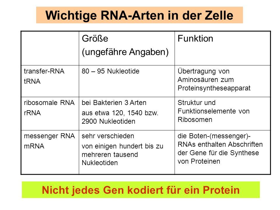Wichtige RNA-Arten in der Zelle