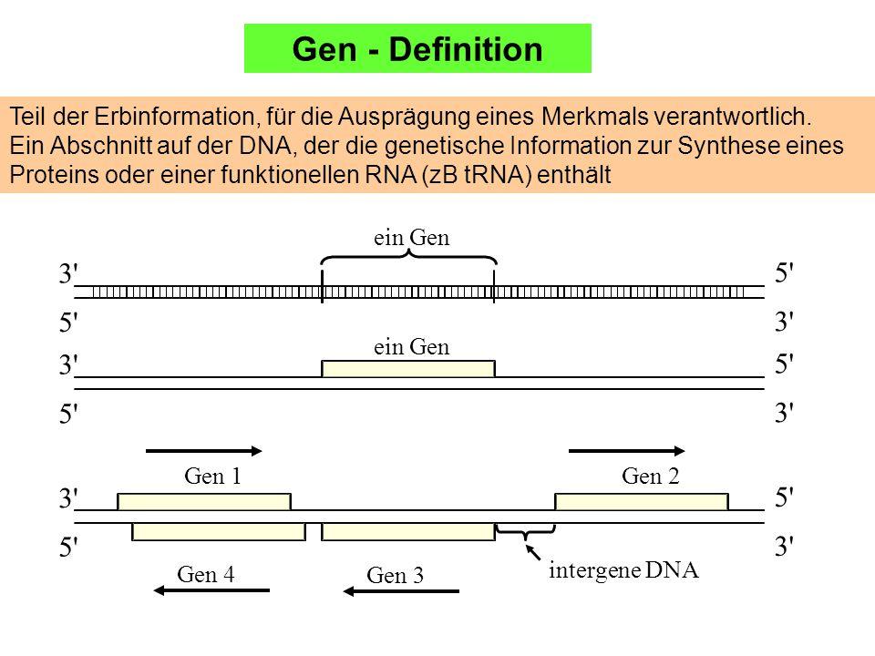 Gen - Definition Teil der Erbinformation, für die Ausprägung eines Merkmals verantwortlich.