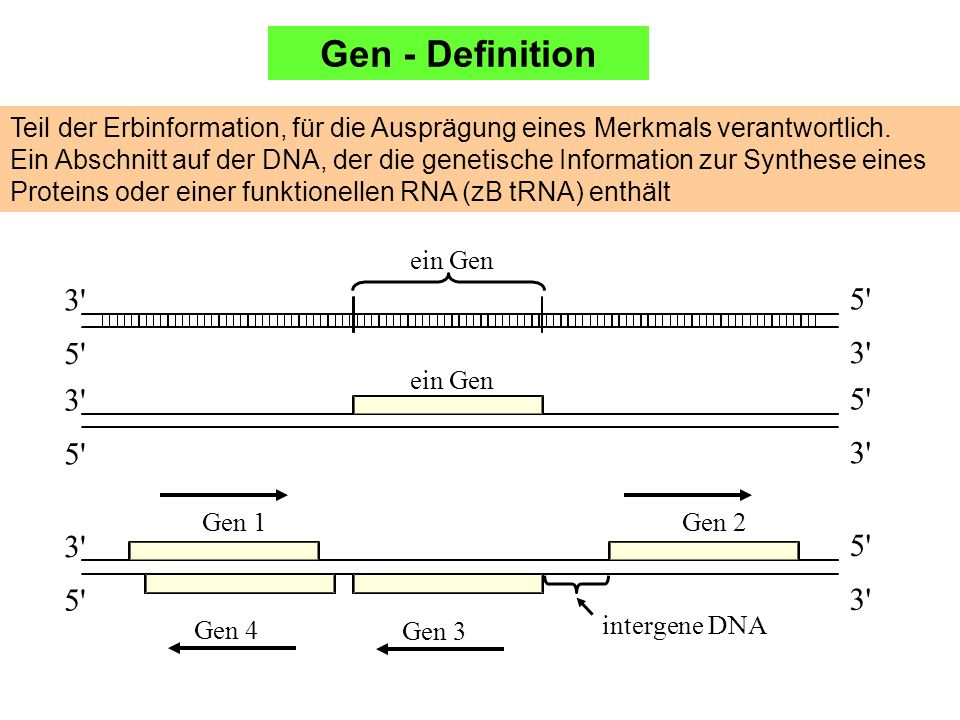 Gen - DefinitionTeil der Erbinformation, für die Ausprägung eines Merkmals verantwortlich.