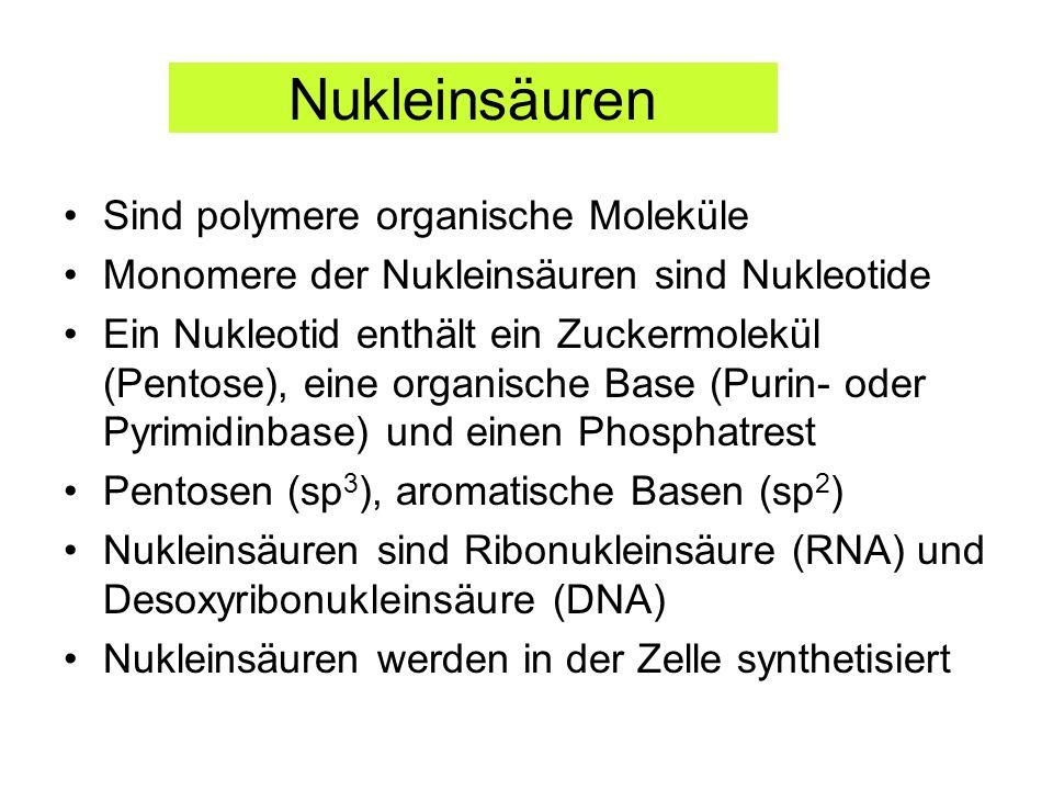 Nukleinsäuren Sind polymere organische Moleküle