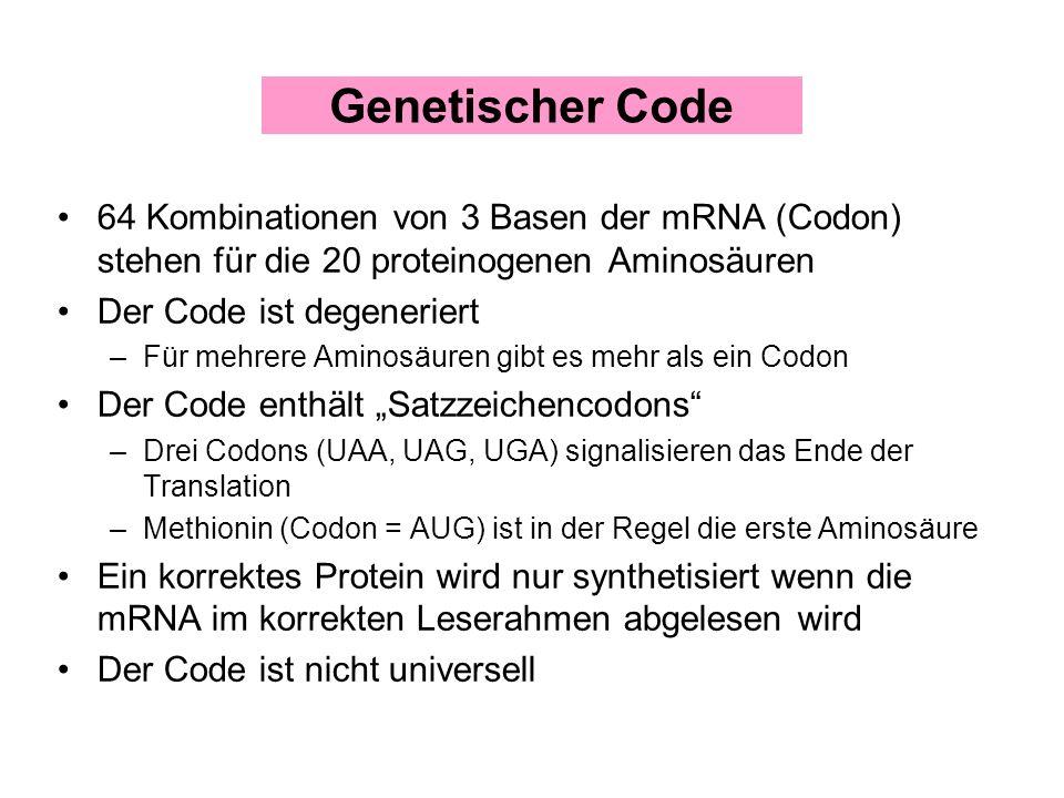 Genetischer Code64 Kombinationen von 3 Basen der mRNA (Codon) stehen für die 20 proteinogenen Aminosäuren.