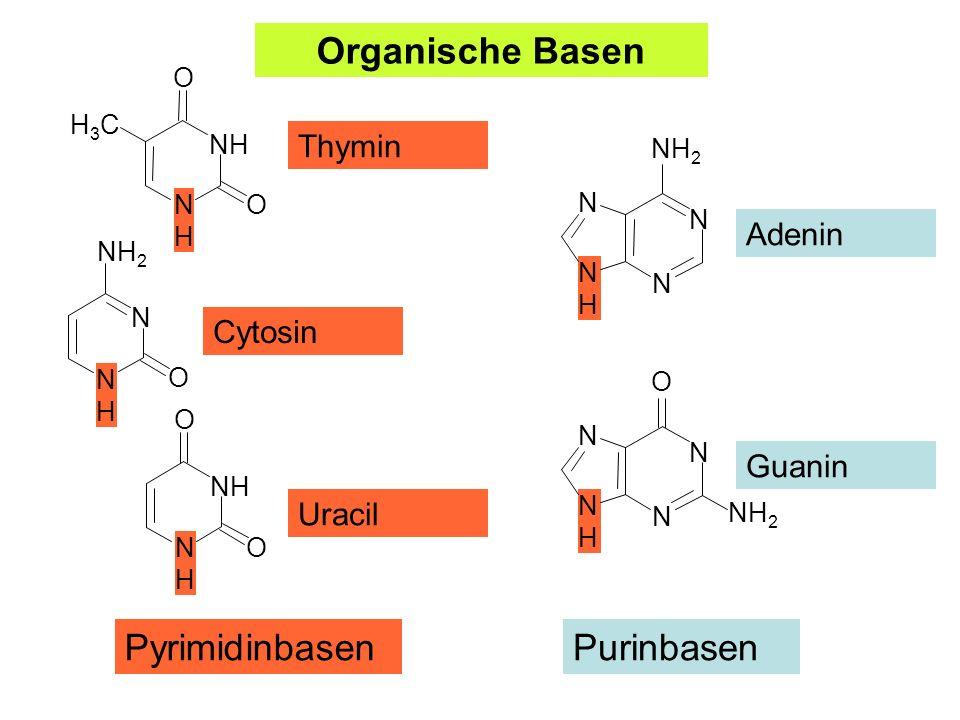 Organische Basen Pyrimidinbasen Purinbasen Thymin Adenin Cytosin