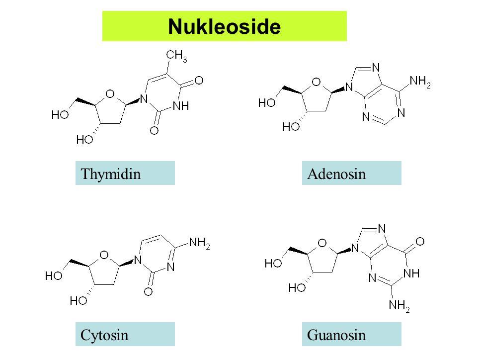 Nukleoside Thymidin Adenosin Cytosin Guanosin