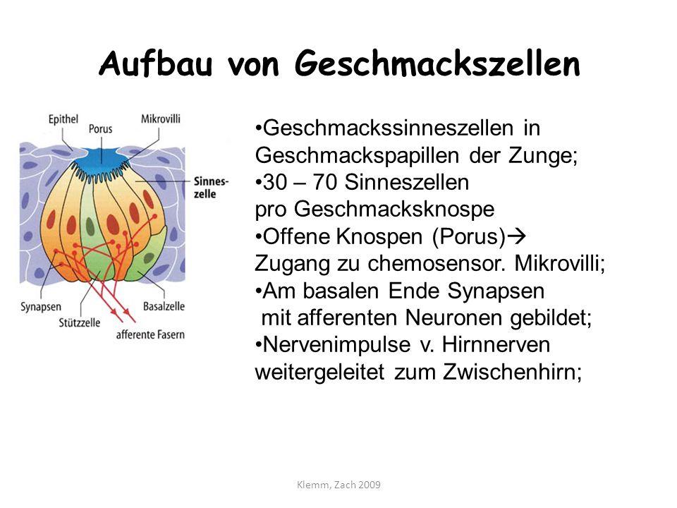 Atemberaubend Geschmacksknospe Bilder - Menschliche Anatomie Bilder ...