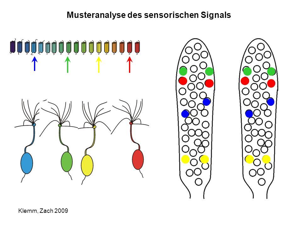 Musteranalyse des sensorischen Signals