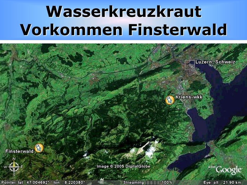 Wasserkreuzkraut Vorkommen Finsterwald