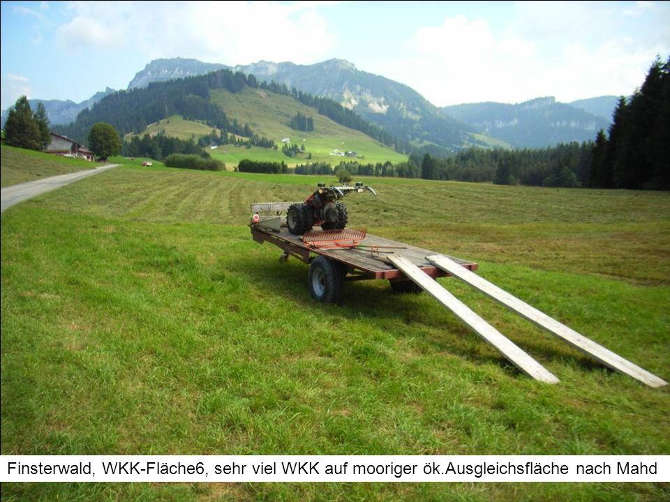 Finsterwald, WKK-Fläche6, sehr viel WKK auf mooriger ök