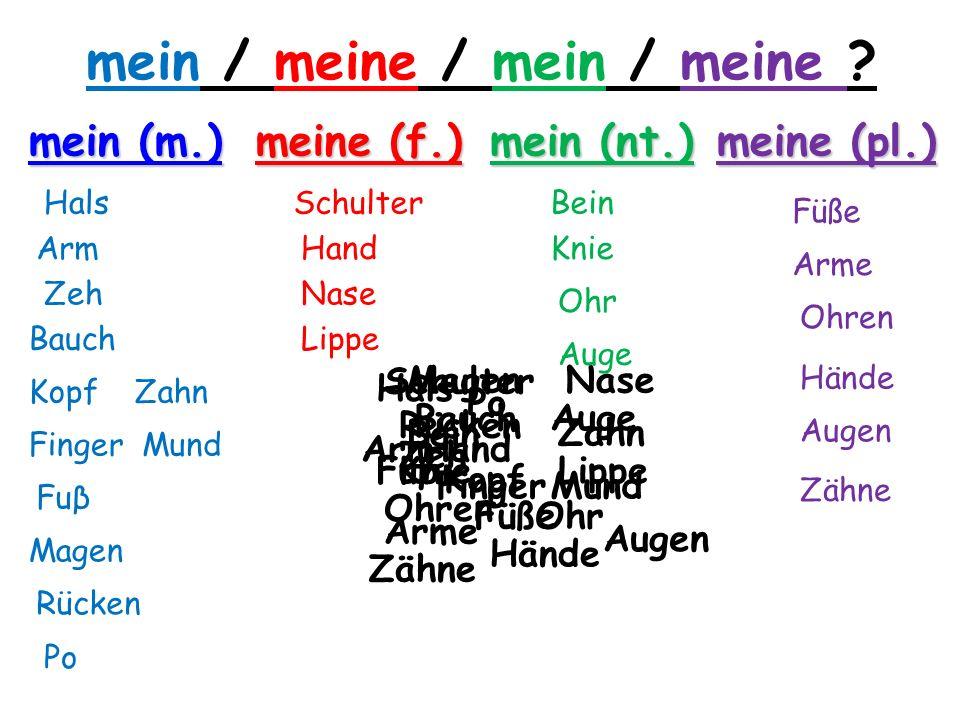 mein / meine / mein / meine