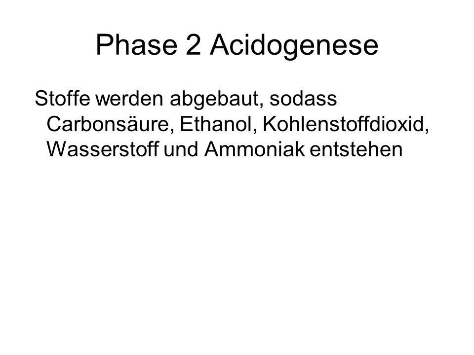 Phase 2 AcidogeneseStoffe werden abgebaut, sodass Carbonsäure, Ethanol, Kohlenstoffdioxid, Wasserstoff und Ammoniak entstehen.