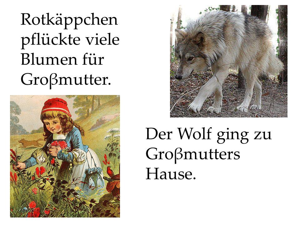 Der Wolf ging zu Groβmutters Hause.