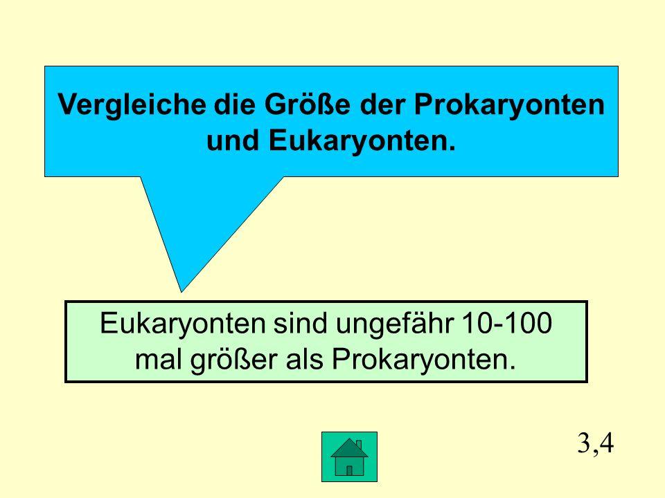 Vergleiche die Größe der Prokaryonten