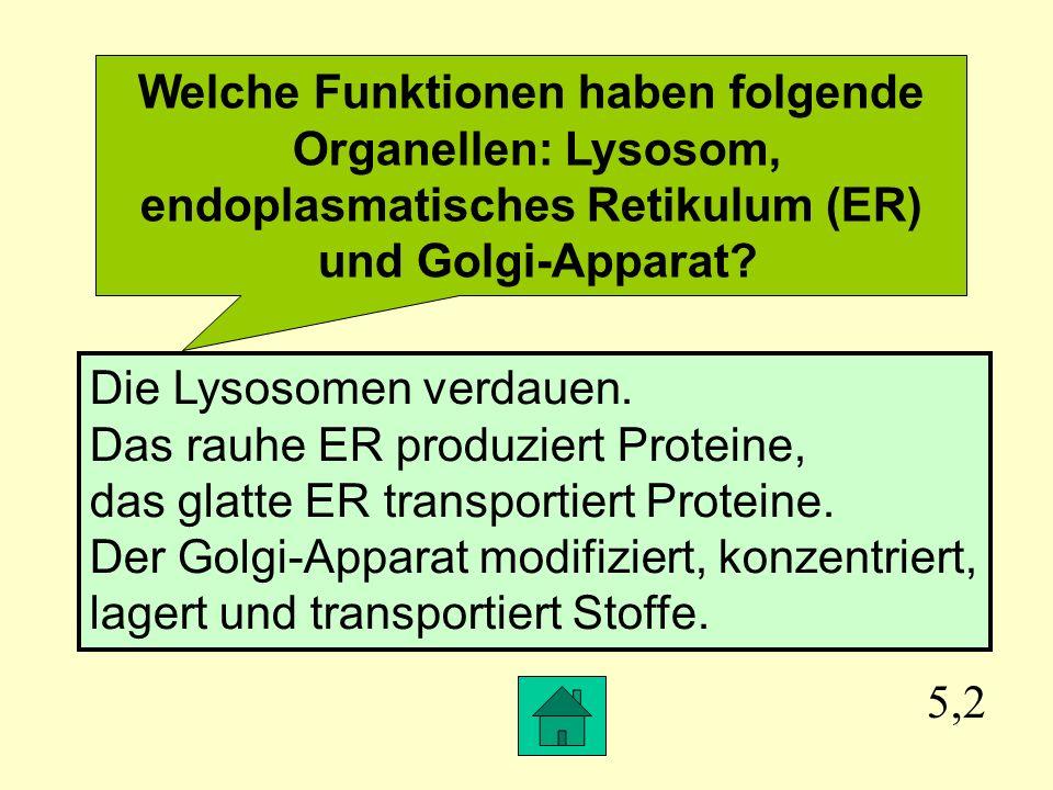 Welche Funktionen haben folgende Organellen: Lysosom,