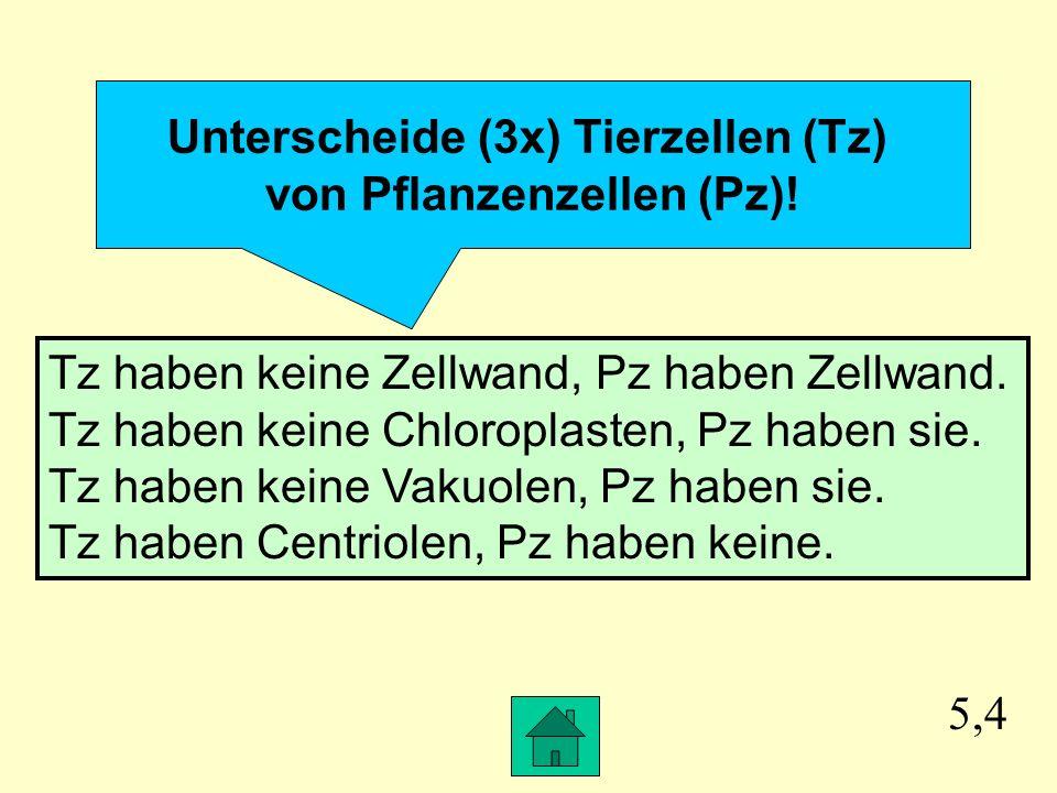 Unterscheide (3x) Tierzellen (Tz) von Pflanzenzellen (Pz)!