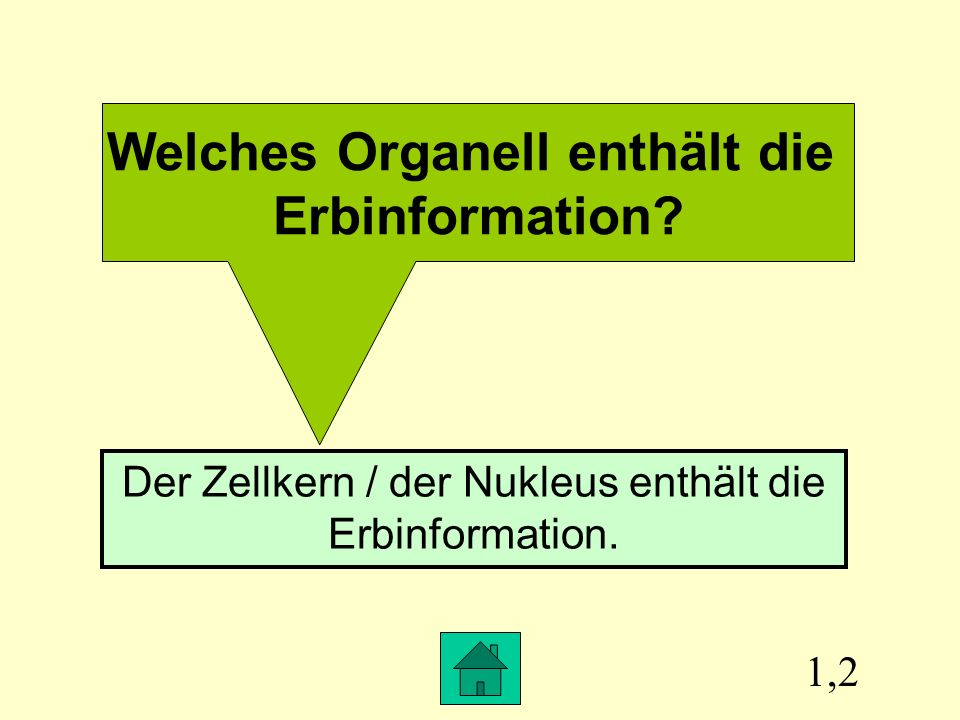 Welches Organell enthält die