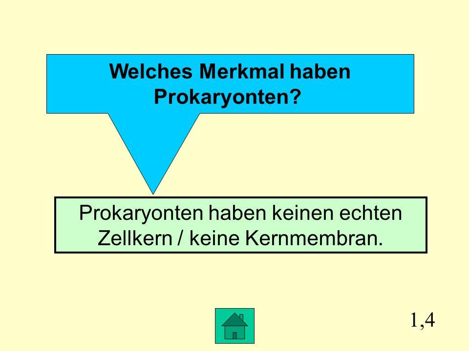 Prokaryonten haben keinen echten Zellkern / keine Kernmembran.