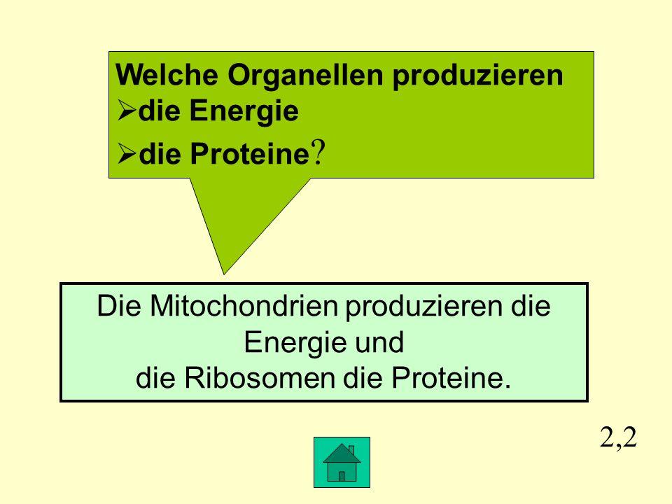 Welche Organellen produzieren