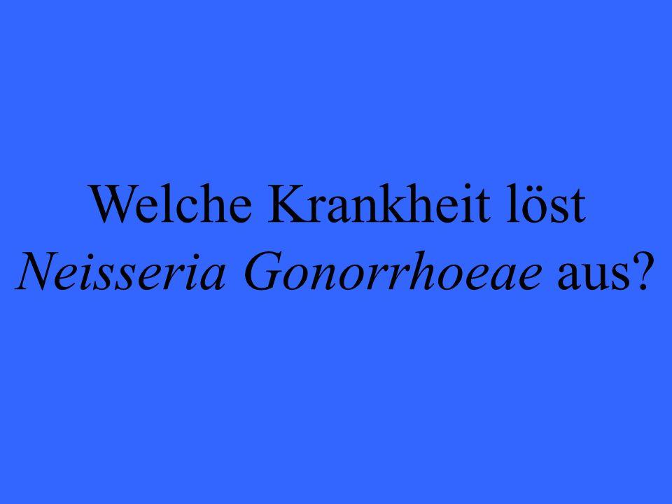 Welche Krankheit löst Neisseria Gonorrhoeae aus