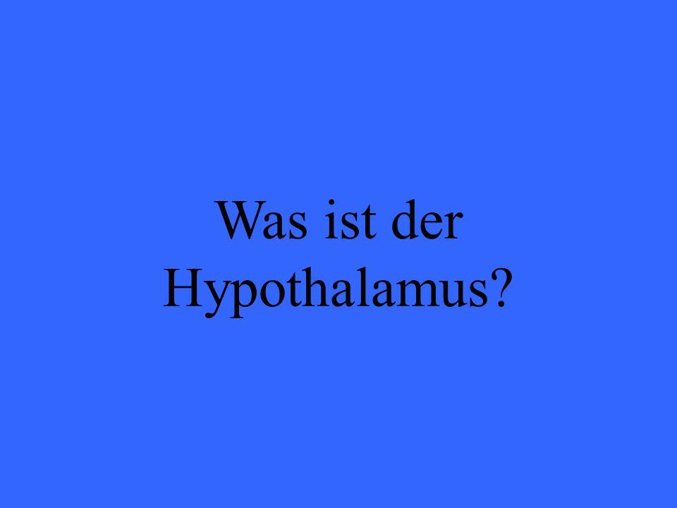Was ist der Hypothalamus