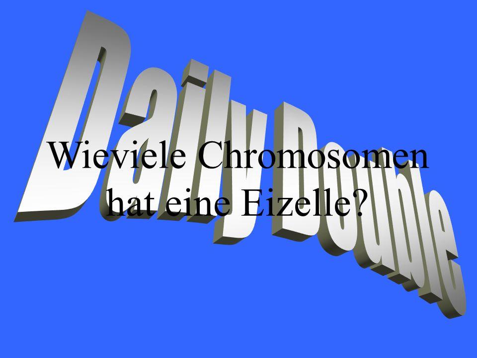 Wieviele Chromosomen hat eine Eizelle