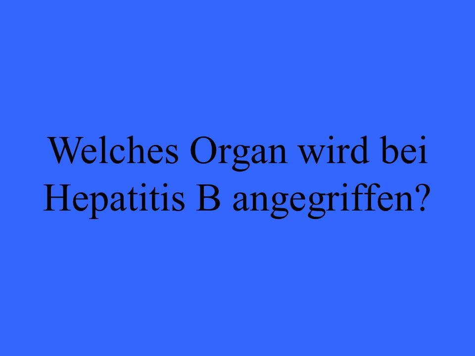 Welches Organ wird bei Hepatitis B angegriffen