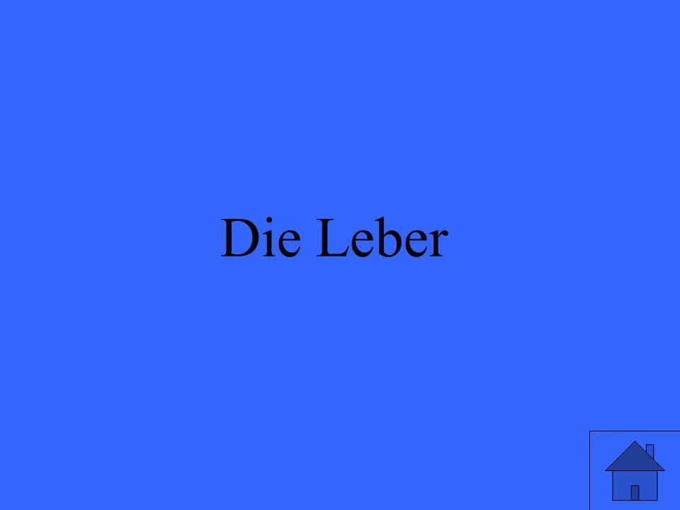 Eleanor M. Savko 01/22/09 Die Leber