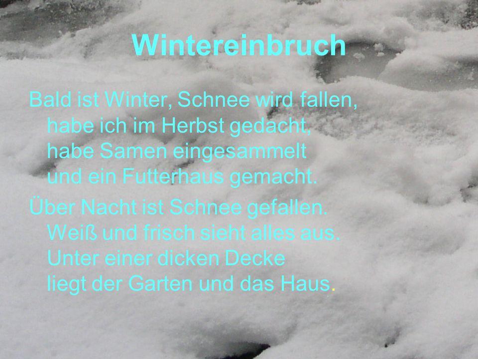 Wintereinbruch Bald ist Winter, Schnee wird fallen, habe ich im Herbst gedacht, habe Samen eingesammelt und ein Futterhaus gemacht.
