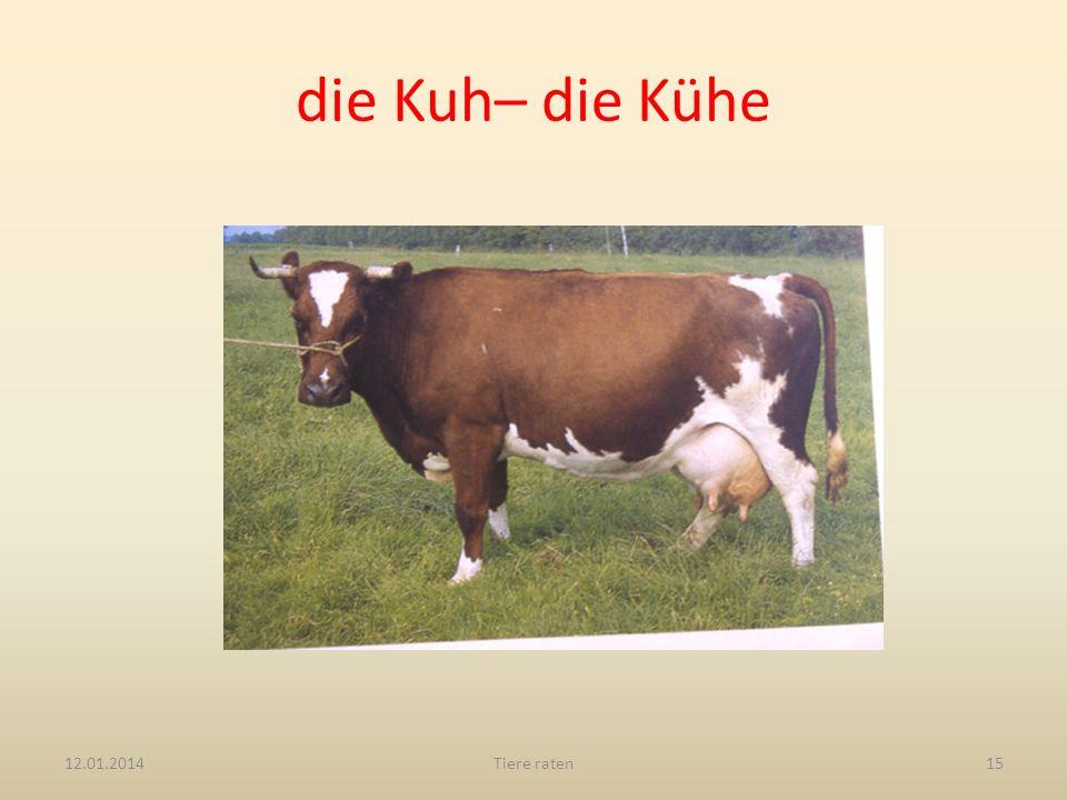 die Kuh– die Kühe 27.03.2017 Tiere raten