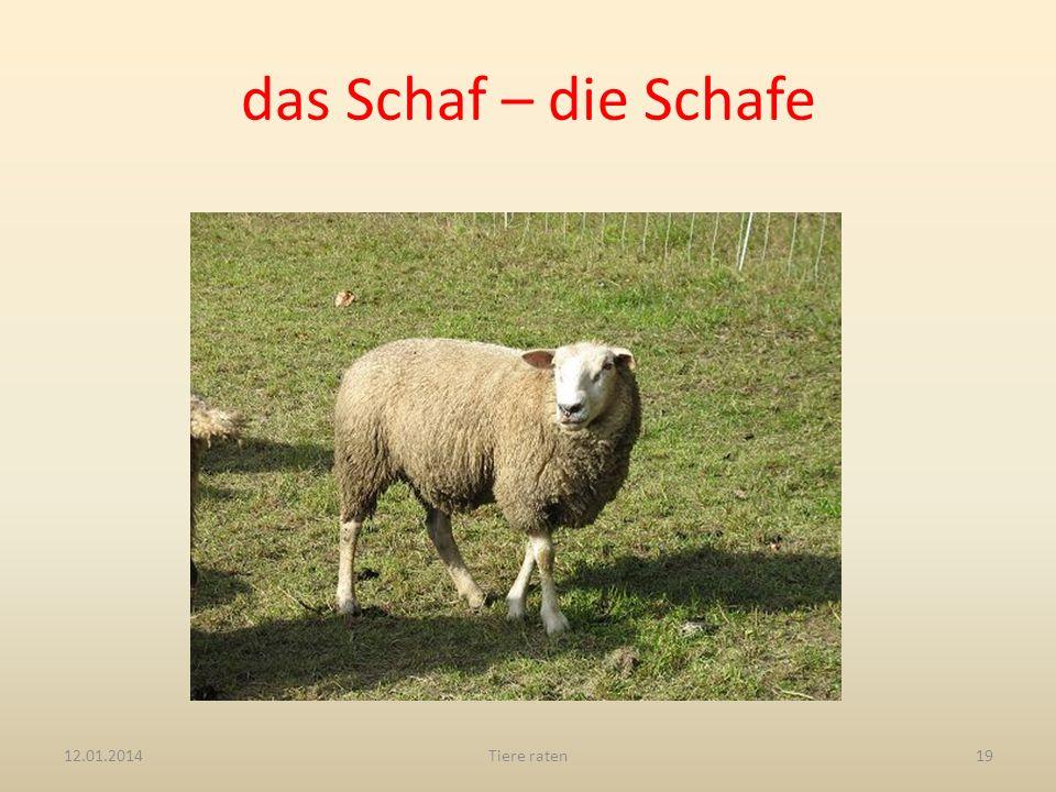 das Schaf – die Schafe 27.03.2017 Tiere raten