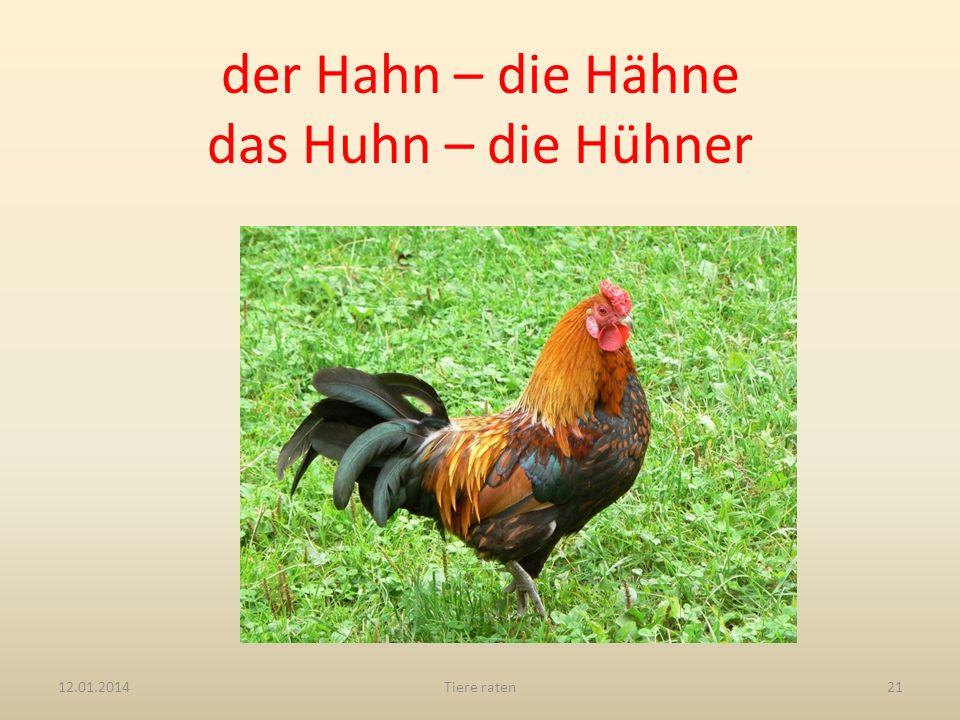 der Hahn – die Hähne das Huhn – die Hühner