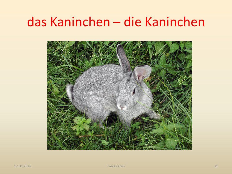 das Kaninchen – die Kaninchen