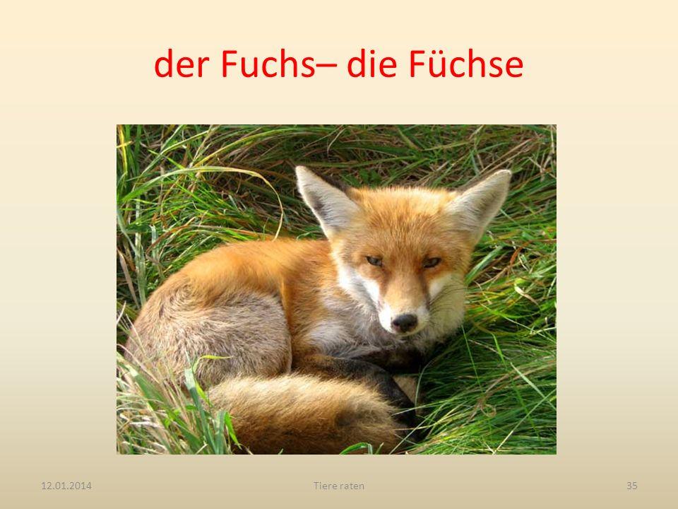 der Fuchs– die Füchse 27.03.2017 Tiere raten