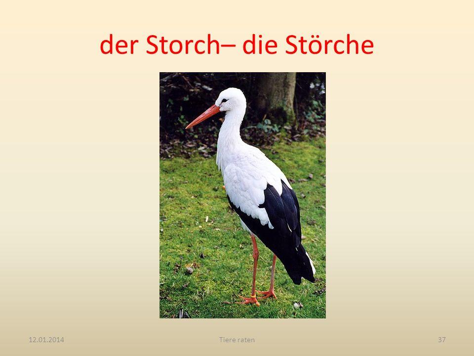 der Storch– die Störche