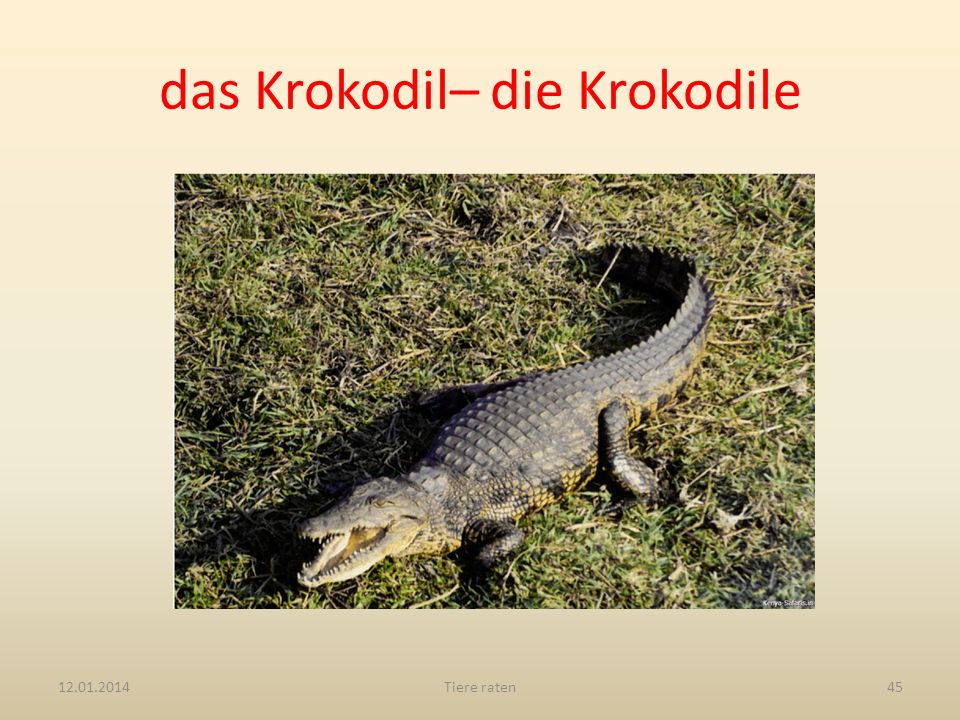 das Krokodil– die Krokodile